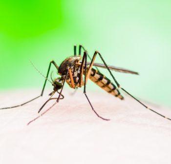 Malaria – przyczyny, objawy, leczenie , miejsce występowania