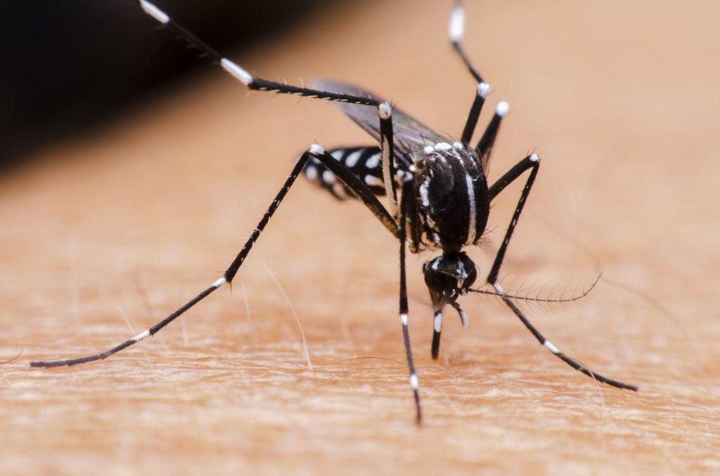 Komar na skórze człowieka