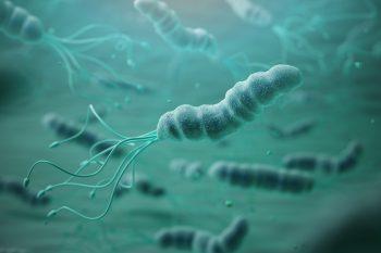 Żywienie przy zakażeniu Helicobacter pylori