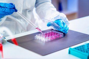 Komórki macierzyste w medycynie – jak je wykorzystać?