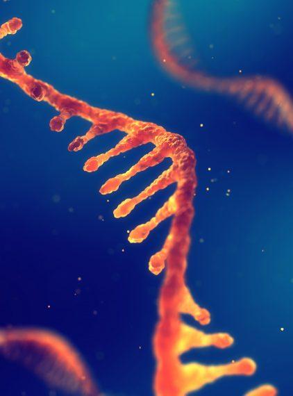 Przełomowe odkrycie naukowców szansą na rozwój terapii genowej?